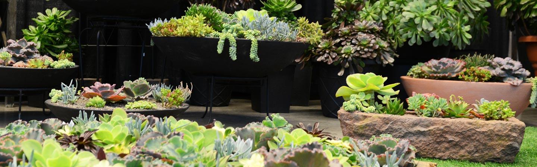 Garden Display