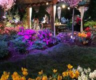 Southern Comfort Garden